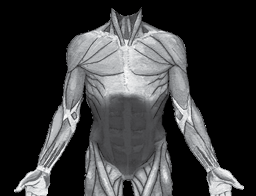 Core muscle highlighted on the body